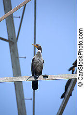 Cormorant Sea Bird sitting preached on metal structure