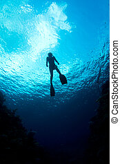 Caribbean Waters - A freediver ascends through the crystal...
