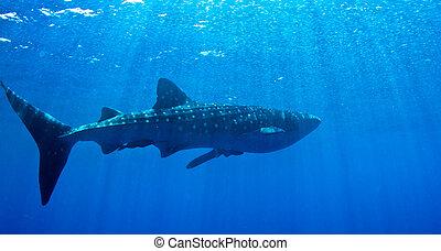 ballena, tiburón, sol
