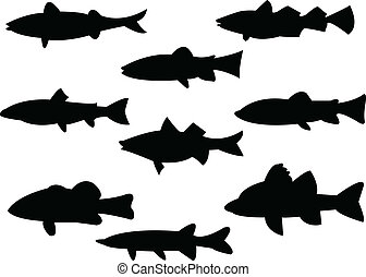 fish silhouette - Collection of fish silhouette - vector