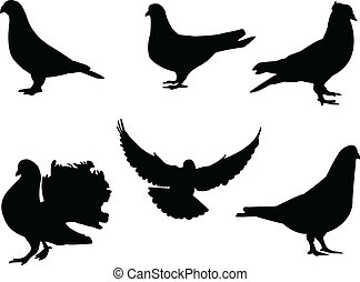 Pigeon silhouette