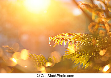 leaf with sun shine