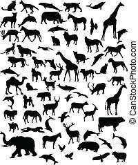 Collection of animals - Collection of 68 animals - vector