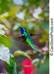 Humming bird - A large humming bird hovers to inspect a...