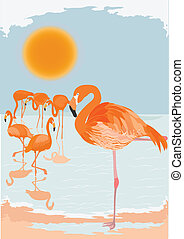 Flamingo scene - Flock of flamingoes on a sunny day