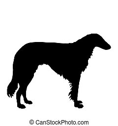 The black silhouette of a longhaired Sighthound