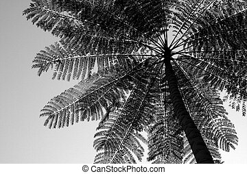 The Palm - A bottom up view of a palm tree in all its...