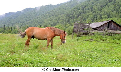 horse is grazing on a pasture against mountains