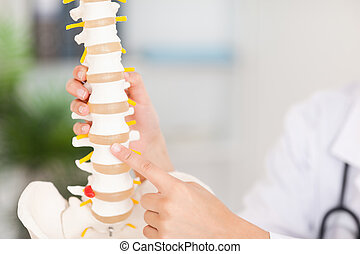Finger pointing at bone in spine - A finger is pointing at a...