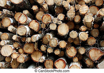 Background of birch wood logs - Stack of cut birch wood...