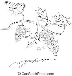 Sketch of grapes