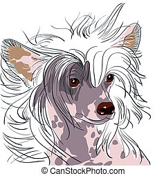 vector dog Chinese Crested breed - close-up portrait of a...