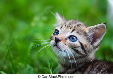 Kitty looking up in front of grass