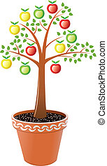 apple tree in pot