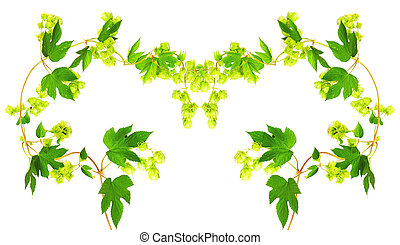 Frame with fresh hop branches, on white background