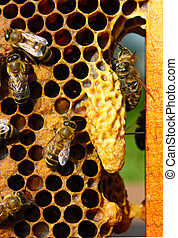The bees take care of larvae of bees and their future...