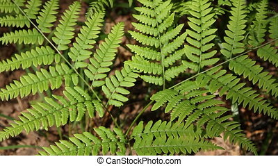 branch of a fern