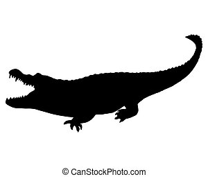 Black Alligator