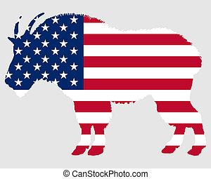 Mountain goat USA