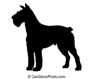 The black silhouette of a German Schnauzer