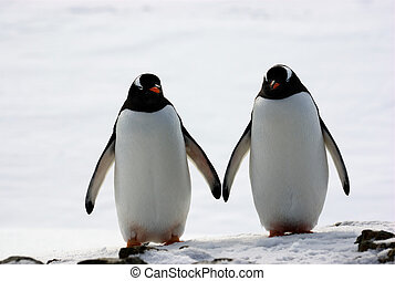 two penguins walk side by side, against the backdrop of the...
