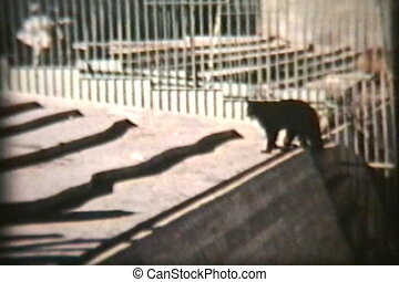 Animals At The Zoo (1970) - A great collage of black bears,...
