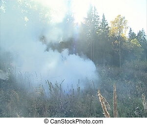 Fire fighting in the forest - The fire in the forest Fire...
