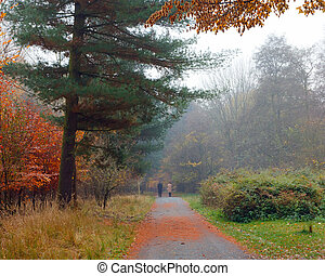 Misty autumnal park