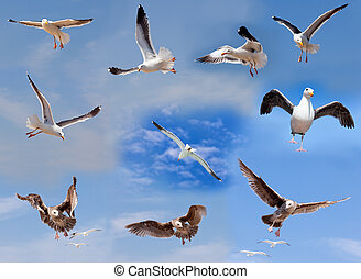 Set of flying seagulls on cloudy sky background