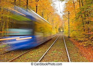 vasút, Ősz, Erdő