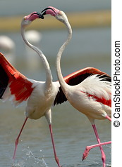 flamingo birds in natural habitat