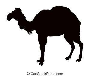 The black silhouette of a camel on white