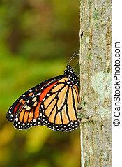 Butterfly - Monarch butterfly on trunk of tree