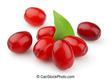 sweet dogberry