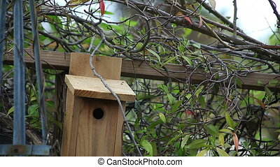 nesting songbird pair - male titmouse sounds an alarm as the...