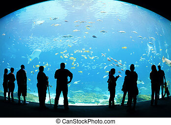 Aquarium - Visitors at an aquarium watching the fish on the...