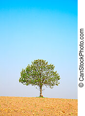 tree on blue sky, around on the ploughed earth.