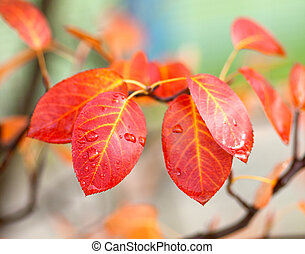 red leaves of tree in the autumn time