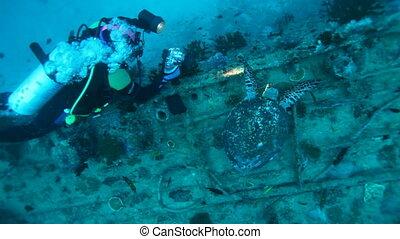 Diver and hawksbill turtle Maldives - Diver and The...