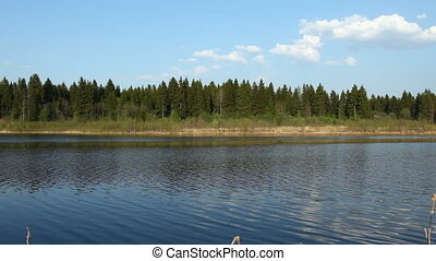 Temperate coniferous forest and river at spring,...