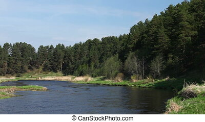 River and pine-trees at spring, Yaroslavl region, Russia...