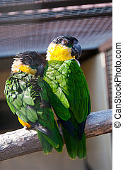 Parrot - Beautiful exotic parrots in zoo