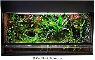rain forest terrarium - terrarium for rain forest pet...
