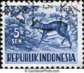 Kantjil - INDONESIA - CIRCA 1956: A stamp printed in...