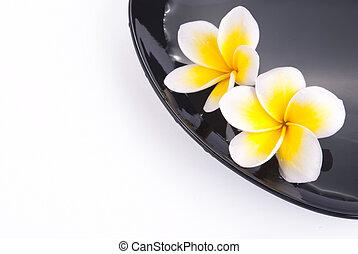 Leelawadee flower in the water