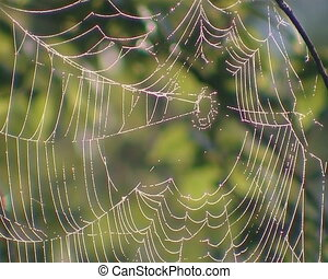 Dewy cobweb hanging on branches