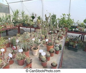 Many different kinds of cactus