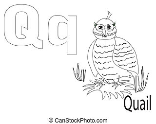 Coloring Alphabet for Kids, Q