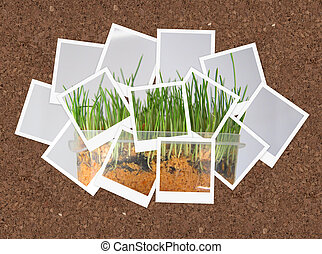 Grown grass, collage of photos for your design