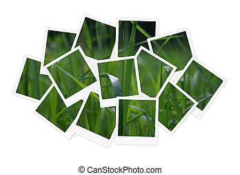 Green grass, collage of photos for your design